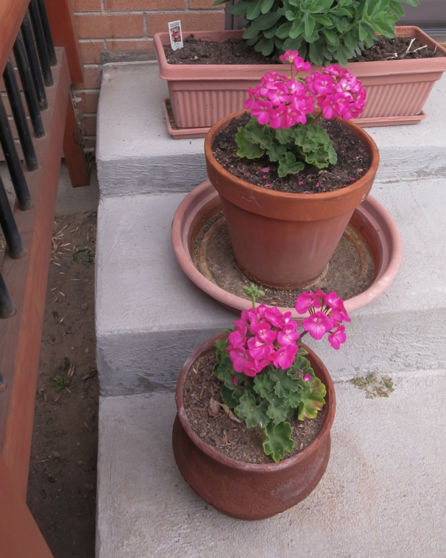 A few potted plants on the patio steps. Annuals are just to much work!
