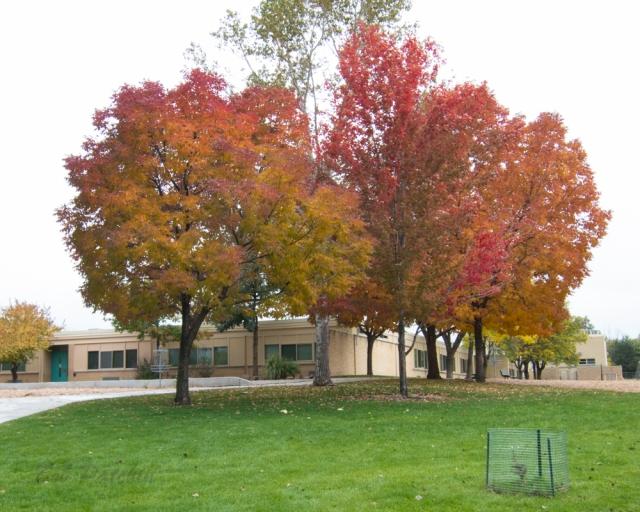 Denver-Colorado-Fall Colors