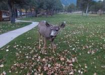 Deer, deer, deer.