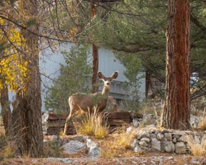 Deer Valley Ranch Colorado