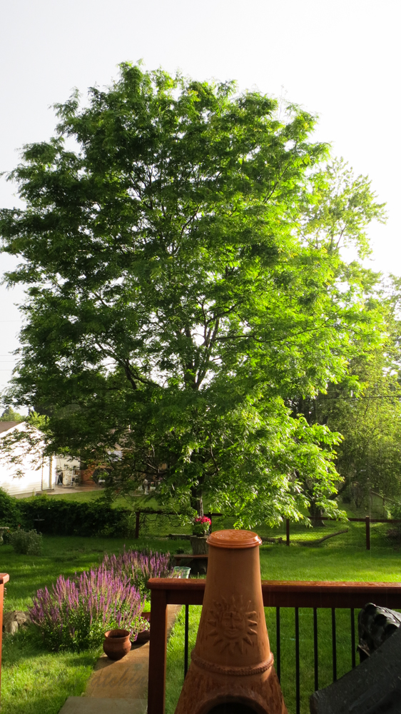 A little rain and a little sunshine-Nice!